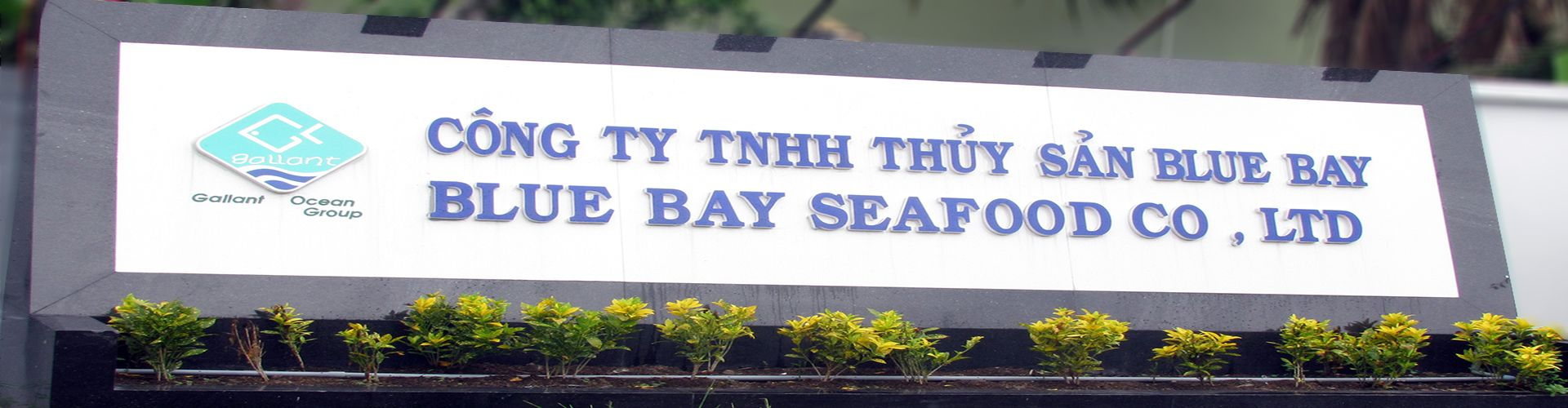 CTY TNHH Blue Bay Seafood